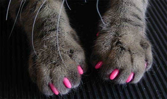 Nail Art for dogs and cats